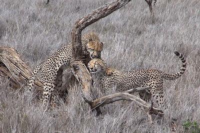 Lewa Wildlife Consevancy - Kenya