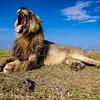 The Yawn by Scar