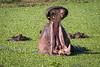 Maasai Mara-1064