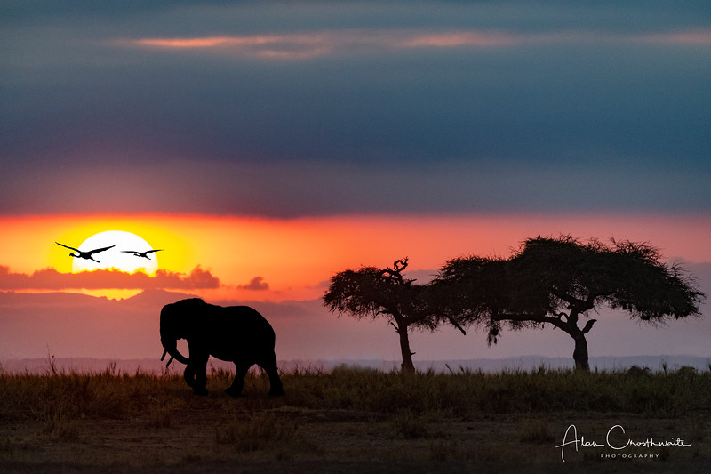 Kenyan Safari Sunset