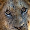 Cubs Eye