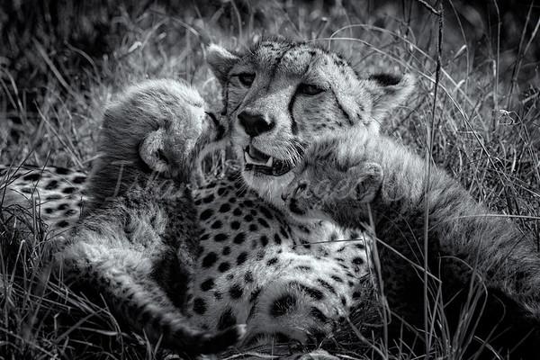 Loving Mother bnw