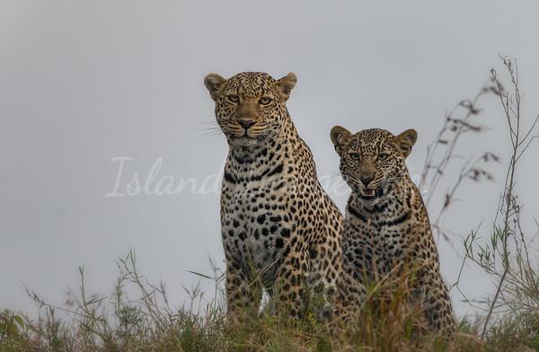 Mom and cub rainy day