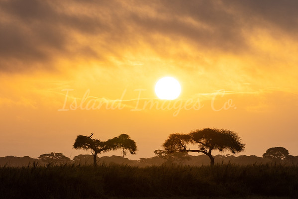 Amboseli Sunrise 1