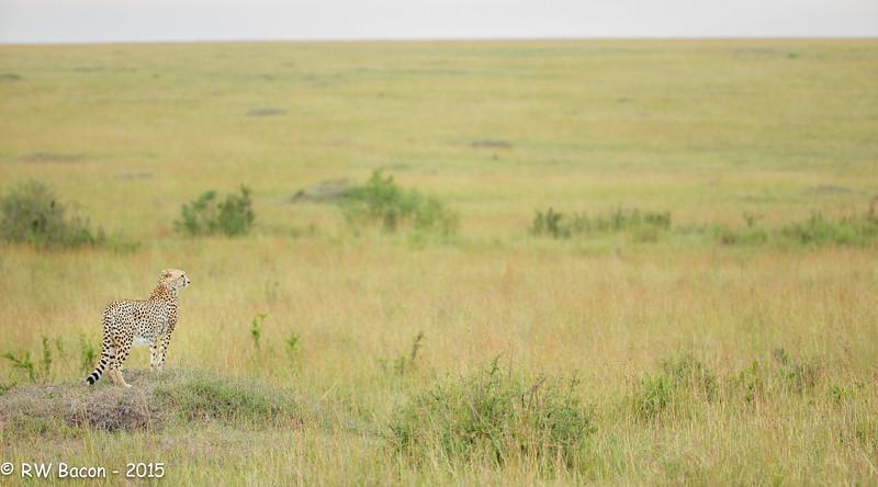 Scanning the Mara