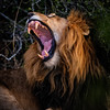 Yawn Yawn Yawn