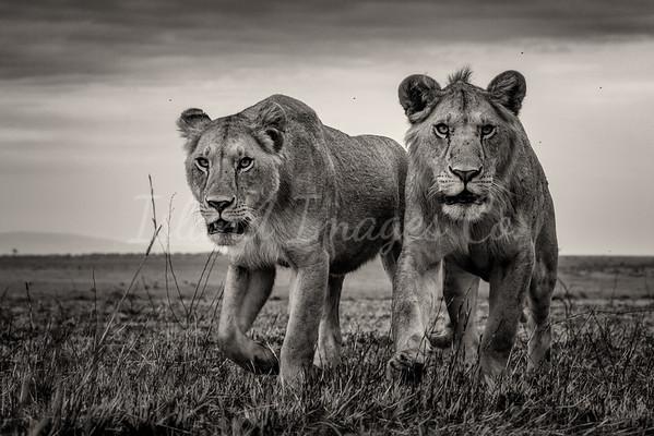 The Mara Duo