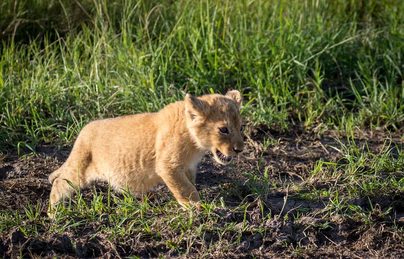 Maasai Mara-2078