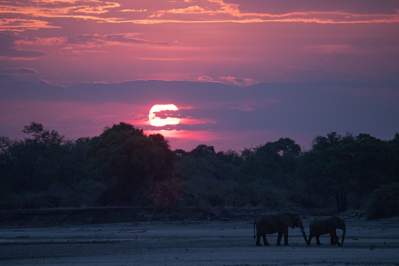 Bucket list.  S Luangwa National Park