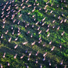 Flying over the Great Migration