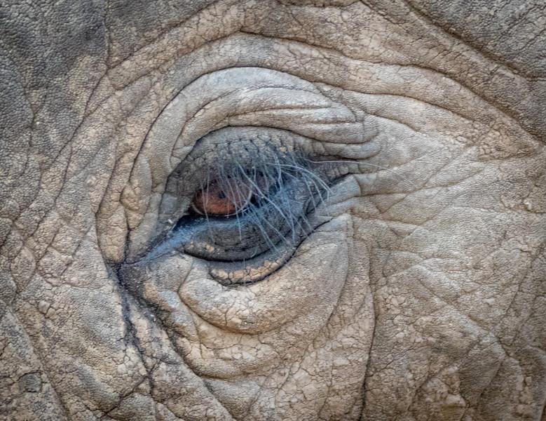 Elephant eye.  South Luangwa National Park, Zambia