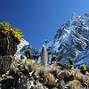 Mount Kenya with fresh snow