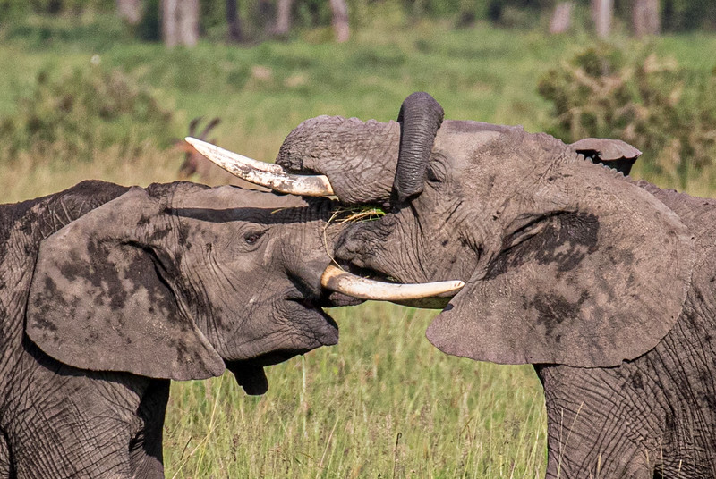 Maasai Mara-267