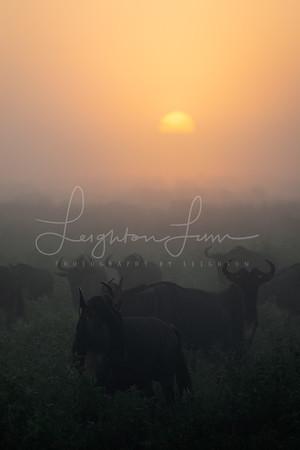 Migration Sunrise