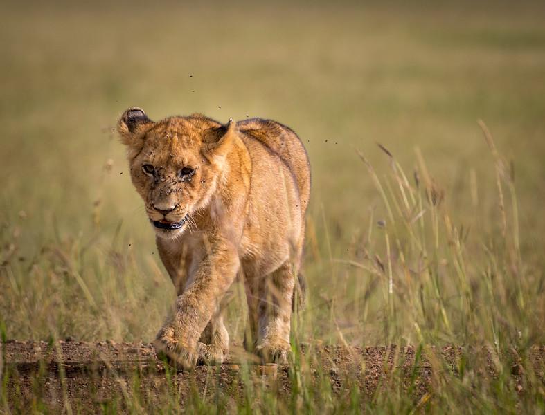Maasai Mara-2436