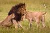 Maasai Mara-2199
