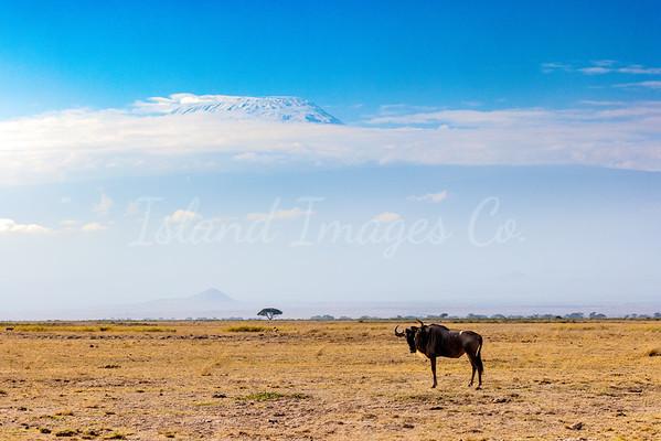 Typical Amboseli