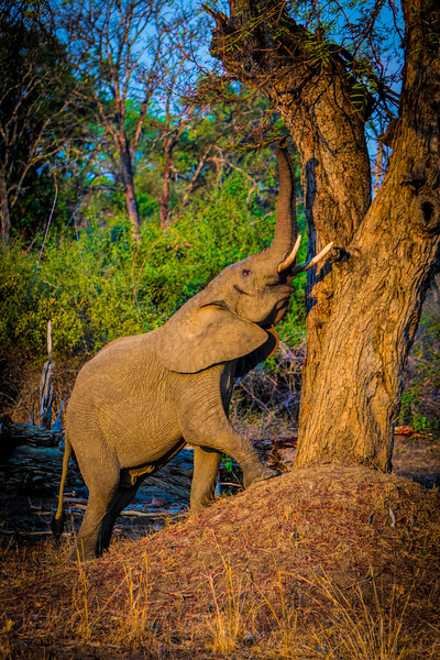 The Reach.  S Luangwa National Park