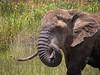 Ngorongoro-936
