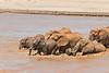Elephant family attempting to ford the Ewaso Ngiro river during rainy season runoff, crossing from Buffalo Springs to Samburu, Kenya.