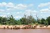 Elephant gathering -- drinking, bathing, and playing in Ewaso Ngiro River. Buffalo Springs, Kenya