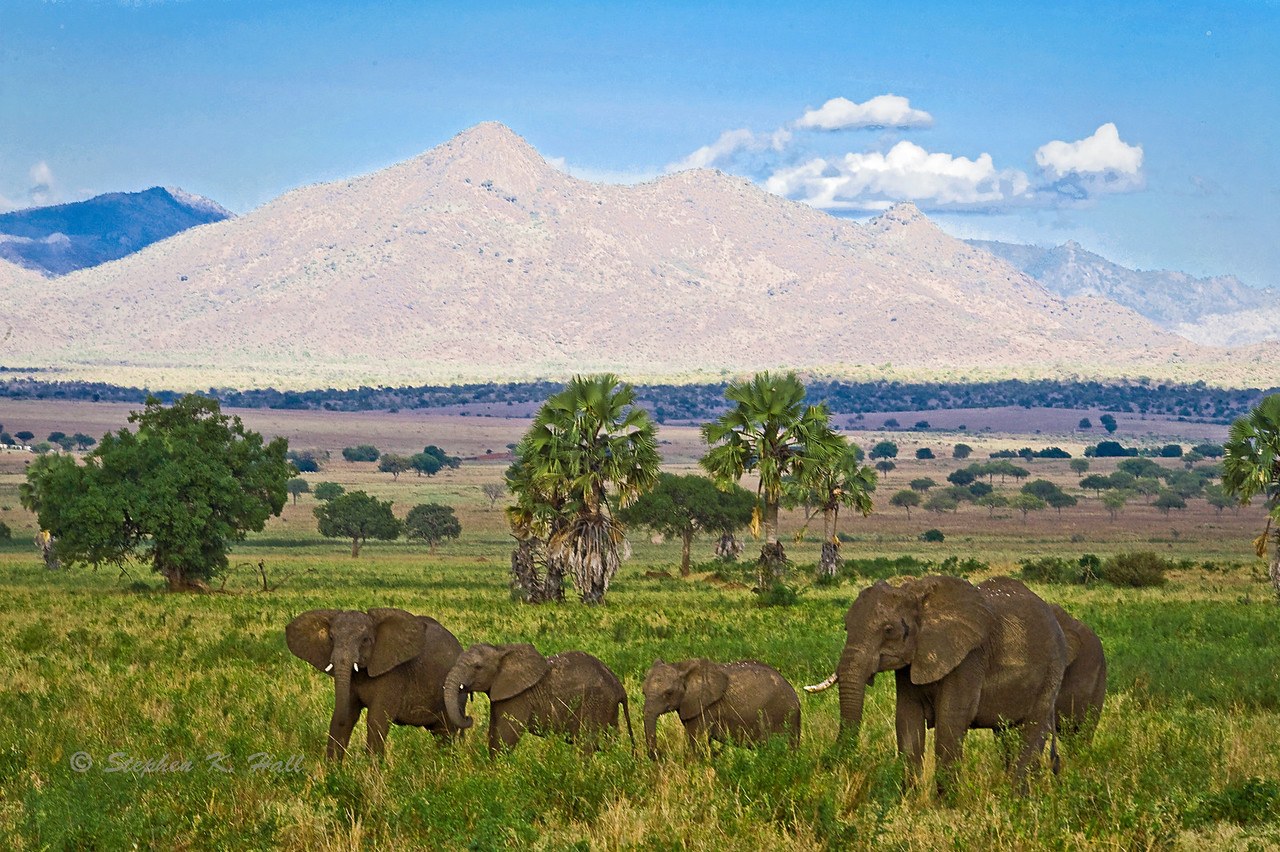 Elephants. Kidepo Valley National Park, northeastern Uganda