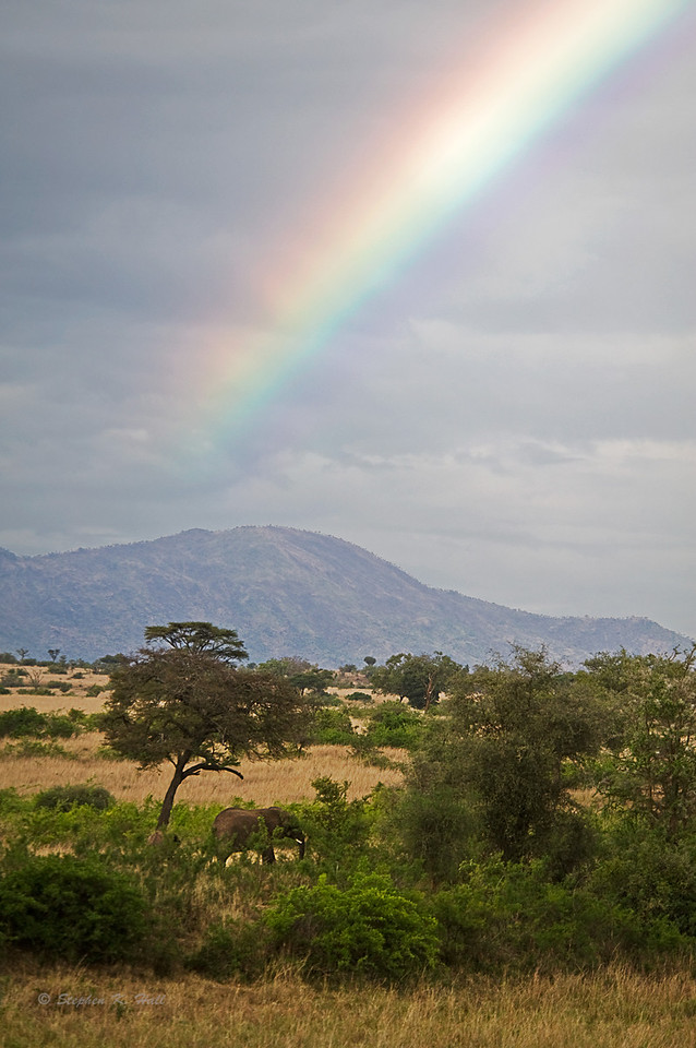 Rainbow and elephant. Kidepo Valley, northeastern Uganda.