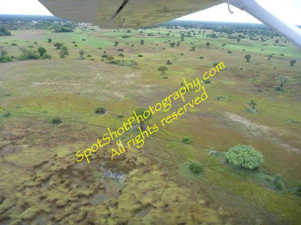 Botswana Little Kwara