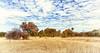Golden Fall     Zimbabwe