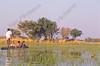 Okavango reserve,reservOkavango reserve,reservaat, réserve,tourists,toeristen,Botswanaaat, réserve,Botswana