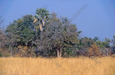 Okavango reserve,reservaat, réserve,Botswana