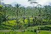 Bali - Backroads - 13 - 72 ppi