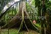 Belize - 8P-0173 - 72 ppi