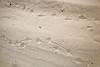 Day 10 - C2-0014 - 72 ppi-gigapixel-scale-2_00x