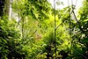 Chiapas - Misol-Ha Falls_mg_0272 - 72 dpi