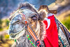 Camel in Cappadocia, Turkey_D5A1062-Edit-Edit- - 72 ppi