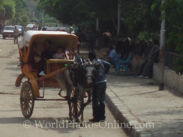 Cairo - Horse Carriage
