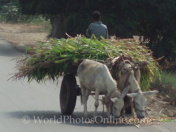 Memphis - Boy taking Sugar Cane to Market