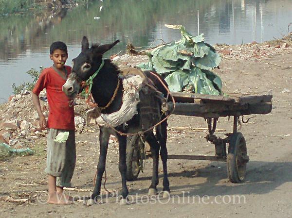 Memphis - Kid, Donkey and Wagon