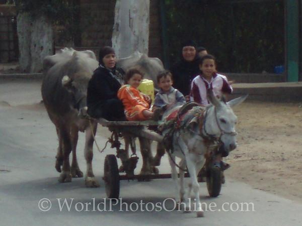 Memphis - Family on wagon leading oxen