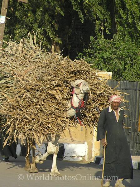 Abydos - Farmer bringing Sugar Cane to Market