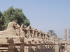Karnak - Avenue of Ram-Headed Sphinxes 2