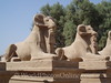 Karnak - Avenue of Ram-Headed Sphinxes 1