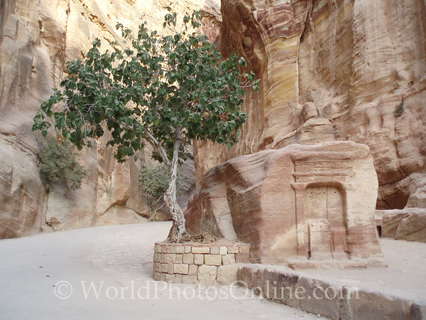 Petra - Siq - Fig tree and small tomb
