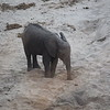 Elephant drinking from dried river bed in Tarangire park
