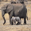 Elephant with newborn Elephant