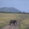 Elephant crossing the road in the Serengeti