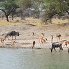 Watering hole at Tarangire Park