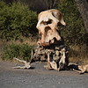 Elephant skull at Tarangire Park