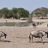 Watering hole in Tarangire Park